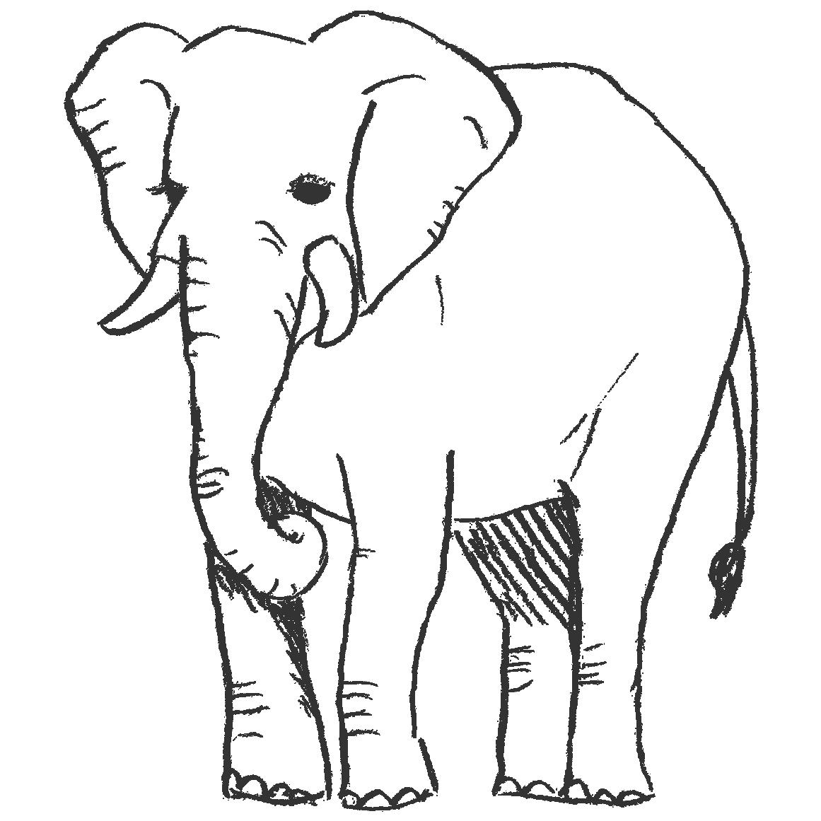 象の全身イラスト(PNG)